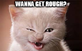 WANNA GET ROUGH? | image tagged in wanna get rough | made w/ Imgflip meme maker