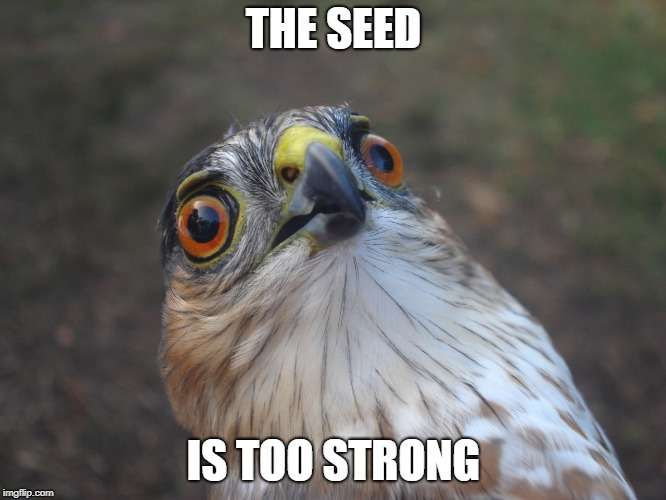 THE SEED IS TOO STRONG | image tagged in birb,drugs,seeds,too damn high,strong,kick | made w/ Imgflip meme maker