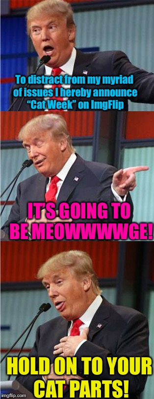 "Bad Pun Trump | To distract from my myriad of issues I hereby announce ""Cat Week"" on ImgFlip IT'S GOING TO BE MEOWWWWGE! HOLD ON TO YOUR CAT PARTS! 