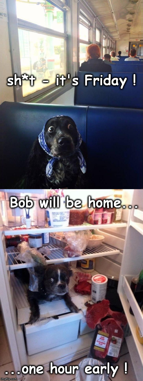 Homemaker's Nightmare (Dog week May 1-8, a Landon_the_memer and NikoBellic event) | sh*t - it's Friday ! ...one hour early ! Bob will be home... | image tagged in dog week,surprised boxer,homemaker | made w/ Imgflip meme maker