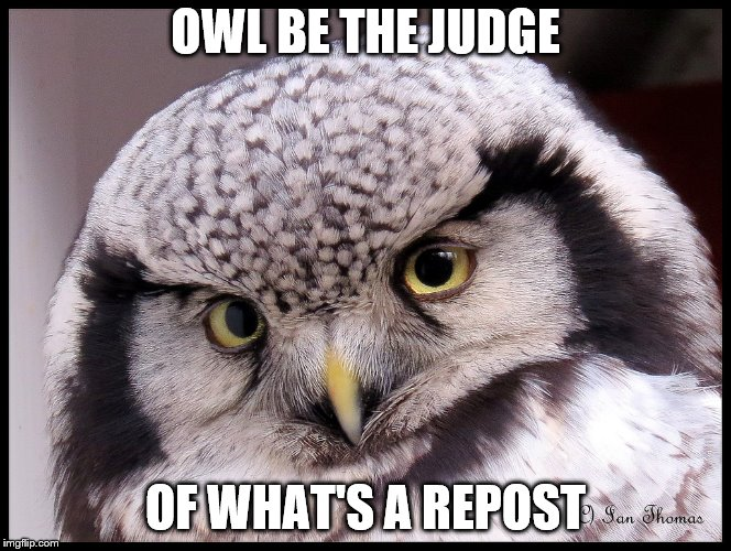 OWL BE THE JUDGE OF WHAT'S A REPOST | made w/ Imgflip meme maker