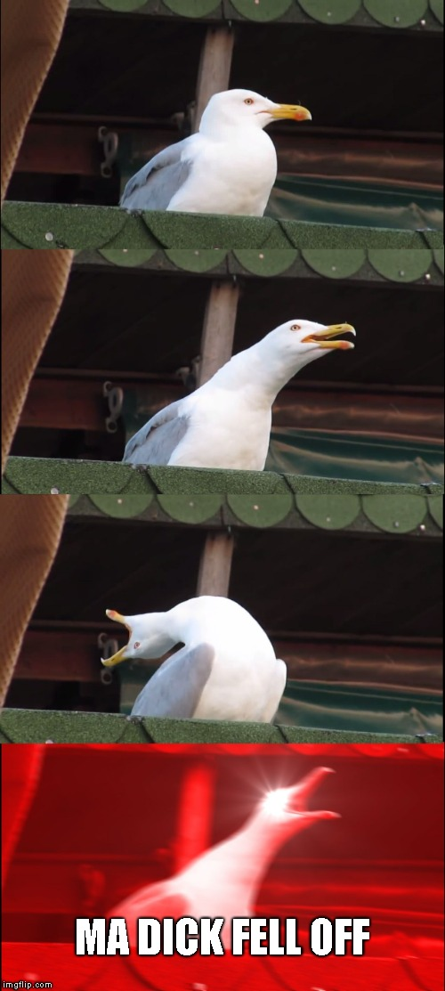 Inhaling Seagull Meme | MA DICK FELL OFF | image tagged in memes,inhaling seagull | made w/ Imgflip meme maker