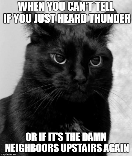 WHEN YOU CAN'T TELL IF YOU JUST HEARD THUNDER OR IF IT'S THE DAMN NEIGHBOORS UPSTAIRS AGAIN | image tagged in pissed cat | made w/ Imgflip meme maker