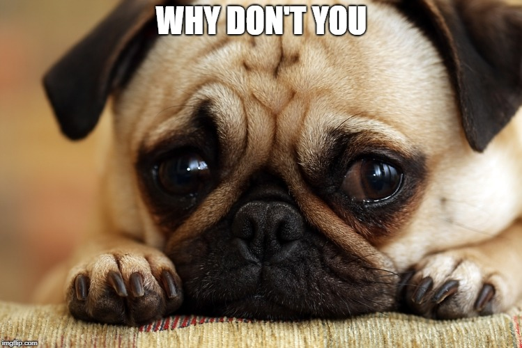 Sad Pug | WHY DON'T YOU | image tagged in sad pug | made w/ Imgflip meme maker