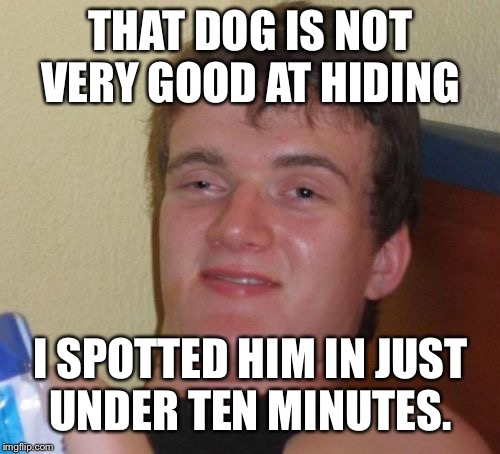 10 Guy Meme | THAT DOG IS NOT VERY GOOD AT HIDING I SPOTTED HIM IN JUST UNDER TEN MINUTES. | image tagged in memes,10 guy | made w/ Imgflip meme maker