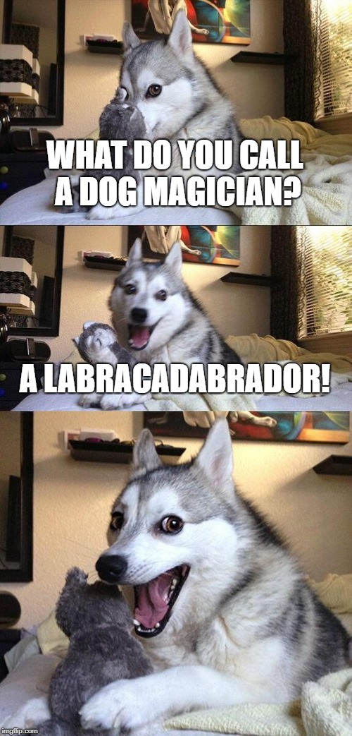 Magic Dog | WHAT DO YOU CALL A DOG MAGICIAN? A LABRACADABRADOR! | image tagged in memes,bad pun dog,magician,labrador,funny,funny memes | made w/ Imgflip meme maker