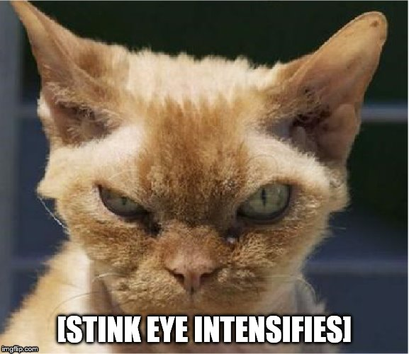 [STINK EYE INTENSIFIES] | image tagged in stink eye intensifies | made w/ Imgflip meme maker
