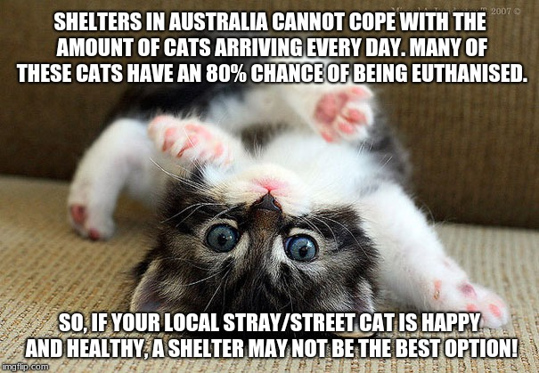 Kitten | SHELTERS IN AUSTRALIA CANNOT COPE WITH THE AMOUNT OF CATS ARRIVING EVERY DAY. MANY OF THESE CATS HAVE AN 80% CHANCE OF BEING EUTHANISED. SO, | image tagged in kitten,cat,stray,street cat,stray cat,community cat | made w/ Imgflip meme maker