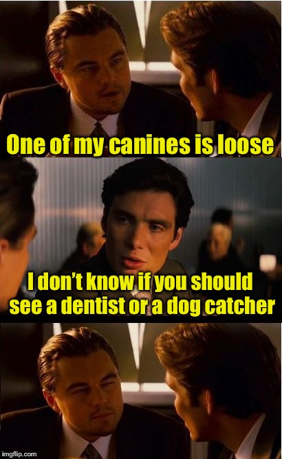Pad pun for good Dog Week | One of my canines is loose I don't know if you should see a dentist or a dog catcher | image tagged in memes,inception,dog week,bad pun | made w/ Imgflip meme maker