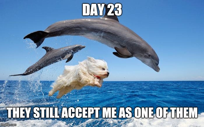 All good.... Still | DAY 23 THEY STILL ACCEPT ME AS ONE OF THEM | image tagged in dolphin dog,meme,hot dog week,dolphin,dog,jumping | made w/ Imgflip meme maker