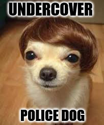 UNDERCOVER POLICE DOG | made w/ Imgflip meme maker