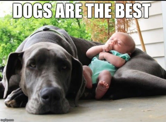 Dogs really the best!  Dog week, May 1-8, a Landon_the_memer and NikkoBellic event! | DOGS ARE THE BEST | image tagged in dog week,cute dogs,jbmemegeek,memes,cute baby | made w/ Imgflip meme maker