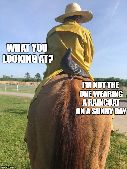You may be cool, but you're not Cowboy wearing a raincoat on a sunny day with a pigeon on your horses ass cool. | WHAT YOU LOOKING AT? I'M NOT THE ONE WEARING A RAINCOAT ON A SUNNY DAY | image tagged in horse,horses,funny,cool | made w/ Imgflip meme maker