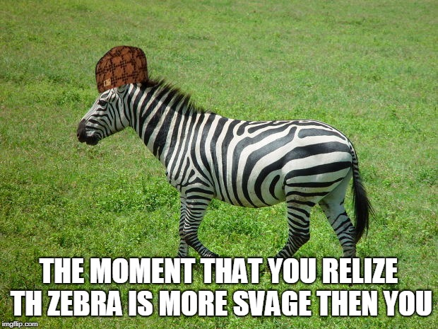 zebra | THE MOMENT THAT YOU RELIZE TH ZEBRA IS MORE SVAGE THEN YOU | image tagged in life | made w/ Imgflip meme maker