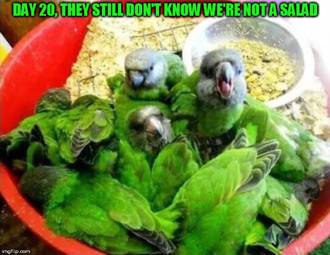 DAY 20, THEY STILL DON'T KNOW WE'RE NOT A SALAD | made w/ Imgflip meme maker