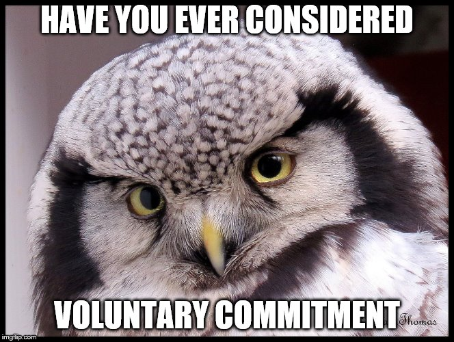 HAVE YOU EVER CONSIDERED VOLUNTARY COMMITMENT | made w/ Imgflip meme maker