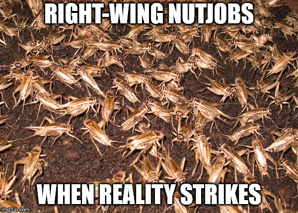 crickets | RIGHT-WING NUTJOBS WHEN REALITY STRIKES | image tagged in crickets | made w/ Imgflip meme maker
