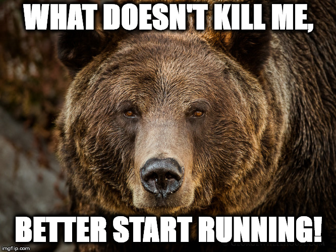 bear | WHAT DOESN'T KILL ME, BETTER START RUNNING! | image tagged in bear | made w/ Imgflip meme maker