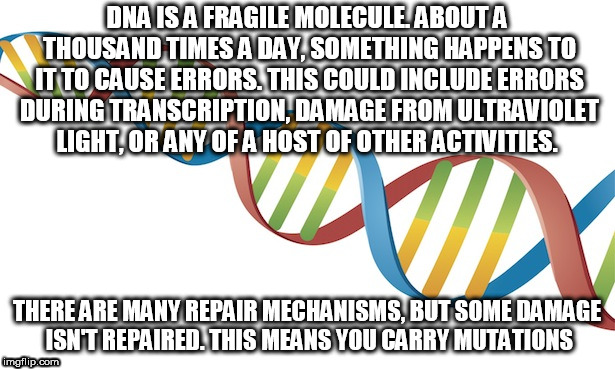 DNA Strand | DNA IS A FRAGILE MOLECULE. ABOUT A THOUSAND TIMES A DAY, SOMETHING HAPPENS TO IT TO CAUSE ERRORS. THIS COULD INCLUDE ERRORS DURING TRANSCRIP | image tagged in dna strand | made w/ Imgflip meme maker