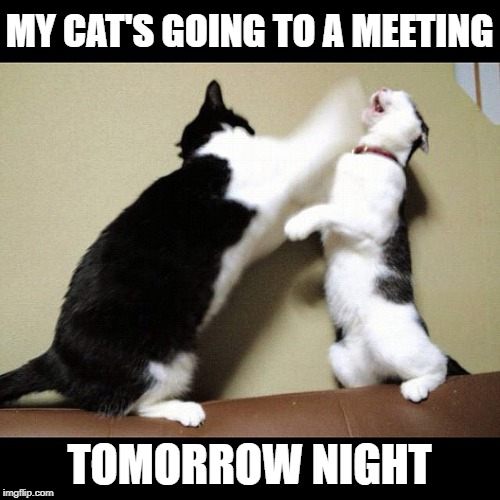 MY CAT'S GOING TO A MEETING TOMORROW NIGHT | made w/ Imgflip meme maker