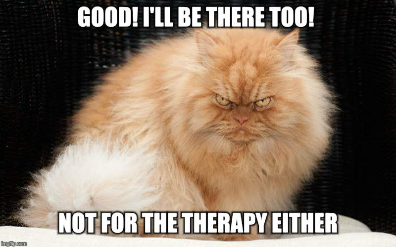 Angry Cat | GOOD! I'LL BE THERE TOO! NOT FOR THE THERAPY EITHER! | image tagged in angry cat | made w/ Imgflip meme maker