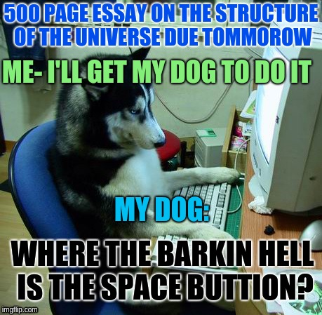 I Have No Idea What I Am Doing Meme | 500 PAGE ESSAY ON THE STRUCTURE OF THE UNIVERSE DUE TOMMOROW ME- I'LL GET MY DOG TO DO IT MY DOG: WHERE THE BARKIN HELL IS THE SPACE BUTTION | image tagged in memes,i have no idea what i am doing,dog,homework,space,universe | made w/ Imgflip meme maker