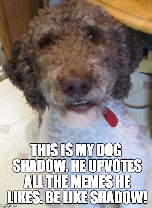 Seriously, help out the creators and upvote the ones you like | THIS IS MY DOG SHADOW. HE UPVOTES ALL THE MEMES HE LIKES. BE LIKE SHADOW! | image tagged in dog,cute,furry,smile | made w/ Imgflip meme maker
