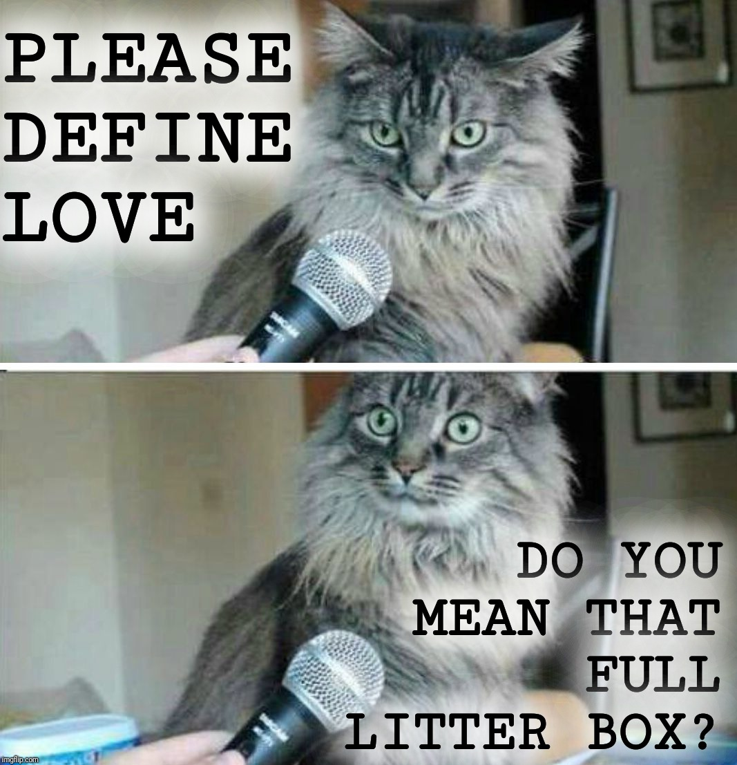 How much do you love me? | PLEASE DEFINE LOVE DO YOU MEAN THAT FULL LITTER BOX? | image tagged in cats,true love,litter box,shit happens,i love you this much,cat interview | made w/ Imgflip meme maker