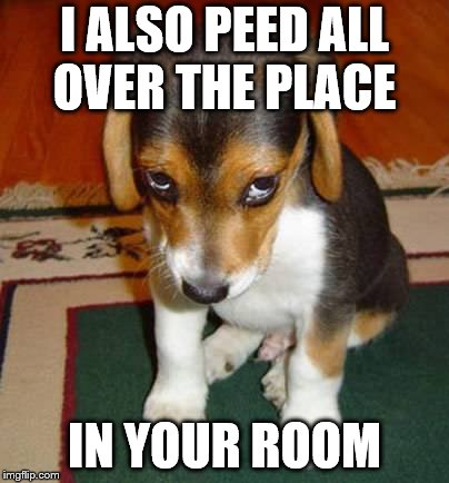 I ALSO PEED ALL OVER THE PLACE IN YOUR ROOM | made w/ Imgflip meme maker
