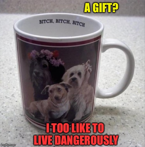 I hope they have a sense of humour. | A GIFT? I TOO LIKE TO LIVE DANGEROUSLY | image tagged in dog week,dogs,coffee cup,memes,funny | made w/ Imgflip meme maker
