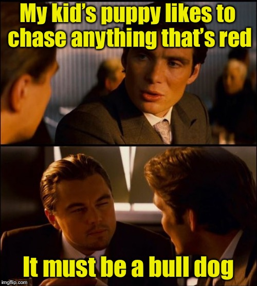 Dog week | My kid's puppy likes to chase anything that's red It must be a bull dog | image tagged in inception 2,memes,dog week,bull,fighting | made w/ Imgflip meme maker