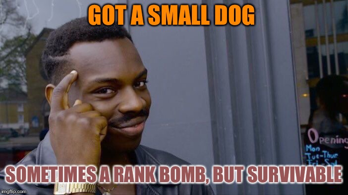 Roll Safe Think About It Meme | GOT A SMALL DOG SOMETIMES A RANK BOMB, BUT SURVIVABLE | image tagged in memes,roll safe think about it | made w/ Imgflip meme maker