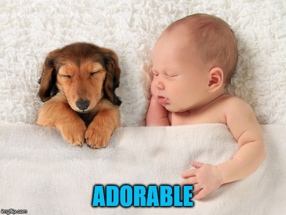 ADORABLE | made w/ Imgflip meme maker
