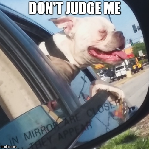 DON'T JUDGE ME | image tagged in mirror dog | made w/ Imgflip meme maker