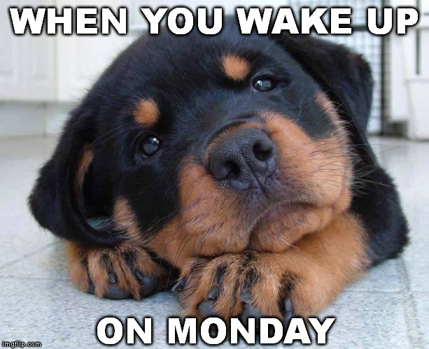 WHEN YOU WAKE UP ON MONDAY | made w/ Imgflip meme maker