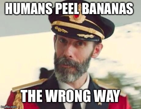 The monkeys peel them the right way |  HUMANS PEEL BANANAS; THE WRONG WAY | image tagged in obviously,captain of the banana boat,float ship,a memadox,meme to memes,memebreaker | made w/ Imgflip meme maker