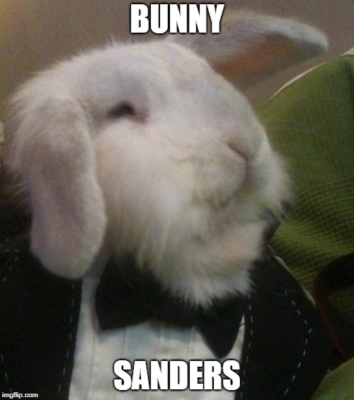 Presidential Bun | BUNNY SANDERS | image tagged in bunny | made w/ Imgflip meme maker