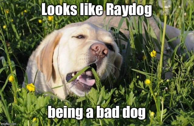 Looks like Raydog being a bad dog | made w/ Imgflip meme maker