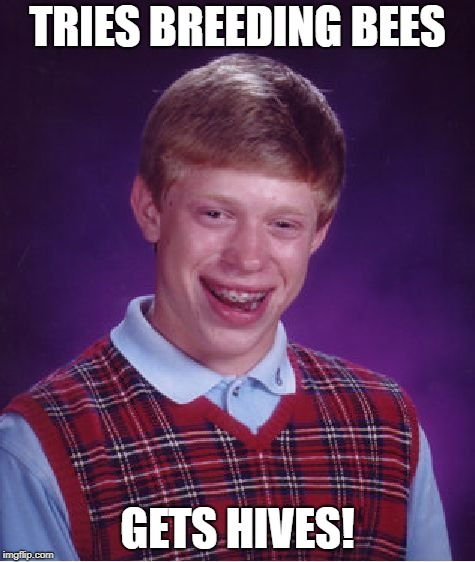 Bad Luck Brian Meme | TRIES BREEDING BEES GETS HIVES! | image tagged in memes,bad luck brian,bees | made w/ Imgflip meme maker