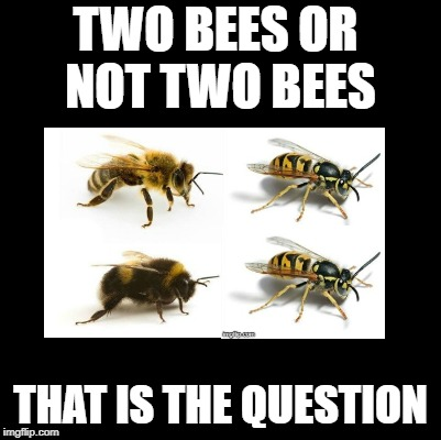 This meme has a sting in the tale! | TWO BEES OR NOT TWO BEES THAT IS THE QUESTION | image tagged in bees,shakespeare | made w/ Imgflip meme maker