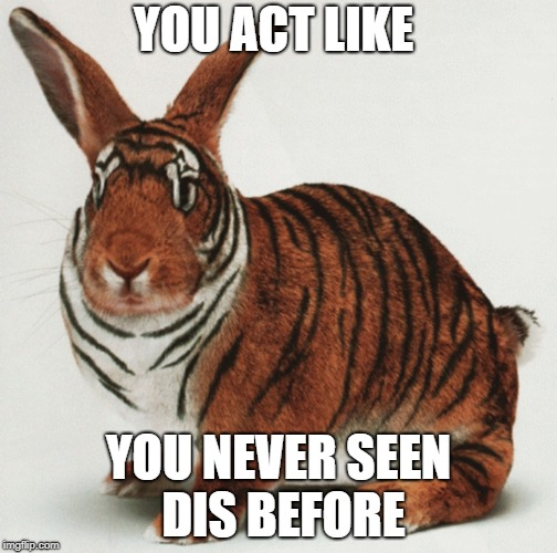 100% Normal | YOU ACT LIKE YOU NEVER SEEN DIS BEFORE | image tagged in bunny,tiger,memes | made w/ Imgflip meme maker