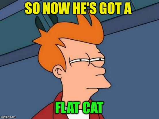 Futurama Fry Meme | SO NOW HE'S GOT A FLAT CAT | image tagged in memes,futurama fry | made w/ Imgflip meme maker