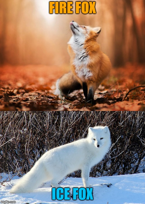 Fire and Ice | FIRE FOX ICE FOX | image tagged in humor,nature,beautiful | made w/ Imgflip meme maker
