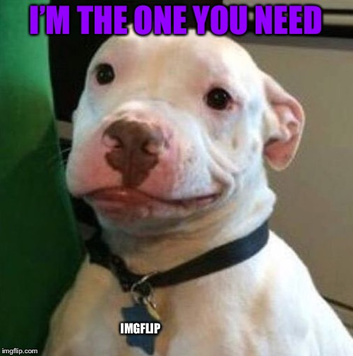 Awkward Dog | I'M THE ONE YOU NEED IMGFLIP | image tagged in awkward dog | made w/ Imgflip meme maker