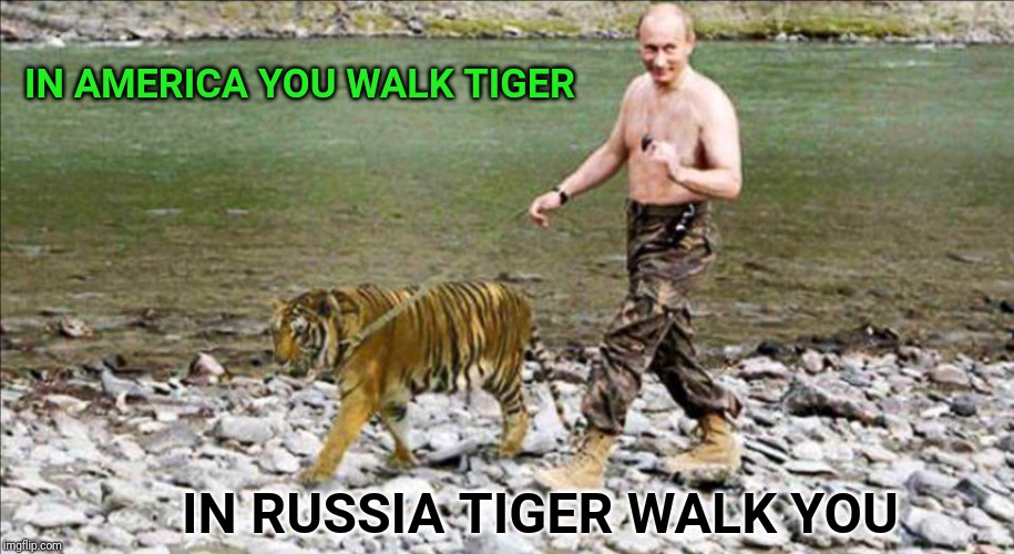 Putin on the Kits | IN AMERICA YOU WALK TIGER IN RUSSIA TIGER WALK YOU | image tagged in putin,vladimir putin,vladimir putin smiling,tiger,russia,america | made w/ Imgflip meme maker