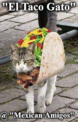 """El Taco Gato"" @ ""Mexican Amigos"" 