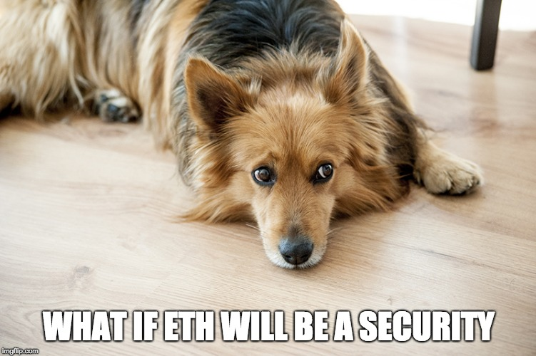 WHAT IF ETH WILL BE A SECURITY | image tagged in worried dog | made w/ Imgflip meme maker