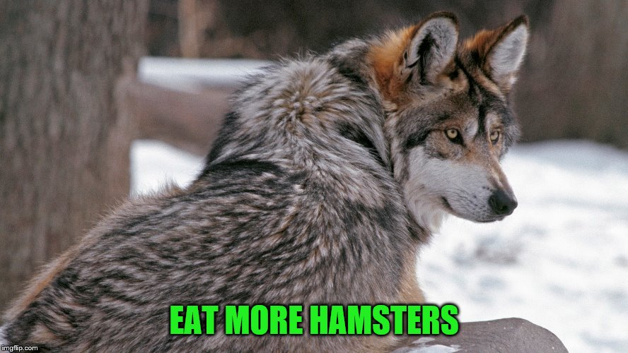 EAT MORE HAMSTERS | made w/ Imgflip meme maker