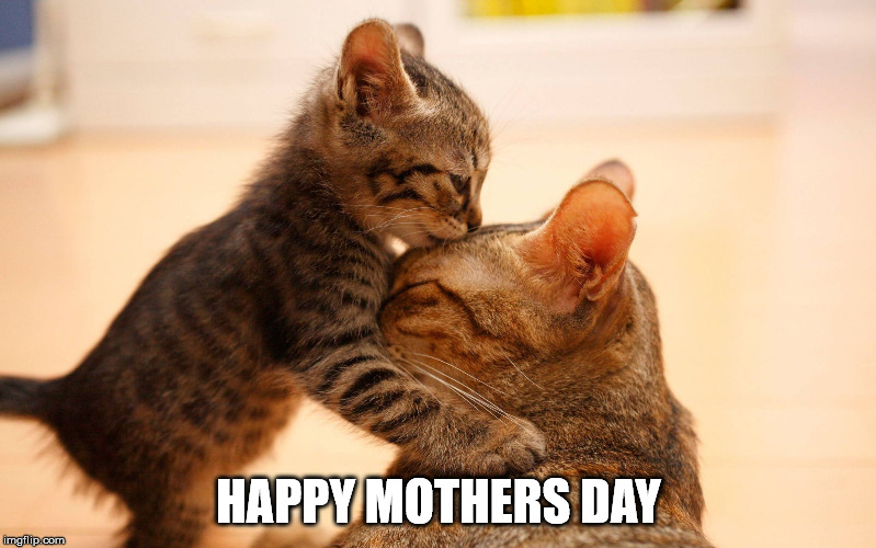HAPPY MOTHERS DAY | image tagged in kitty kiss | made w/ Imgflip meme maker