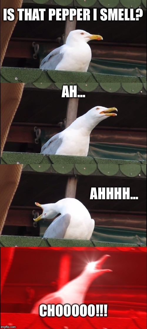 Inhaling Seagull Meme | IS THAT PEPPER I SMELL? AH... AHHHH... CHOOOOO!!! | image tagged in memes,inhaling seagull | made w/ Imgflip meme maker